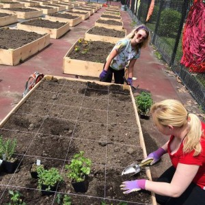 Urban Gardeners seeding community at NEIU by Paul Bick