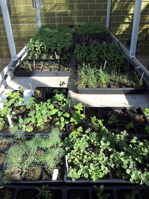 The greenhouse acts as a home to a vast variety of plants that students cultivate for their fundraising sale.