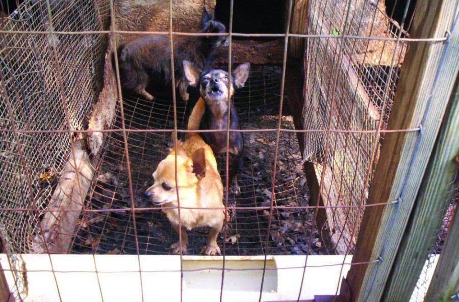 Puppy mills deny dogs a good quality of life, an animal rights violation.