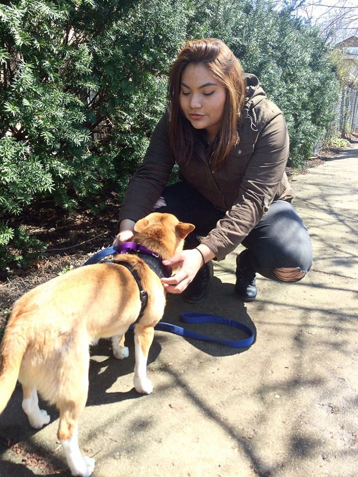 The Puppy Therapy Event will take place at the Quad on April 24th from 2 p.m.