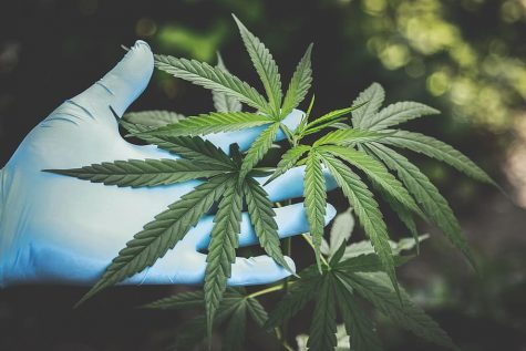 Impact of COVID-19 on cannabis industry: Even CDC recommends stocking up on marijuana